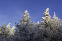 Winter landscape. Frosted tree branches in the winter landscape Royalty Free Stock Photos