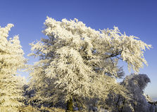 Winter landscape. Frosted tree branches in winter landscape at sunset Royalty Free Stock Photos
