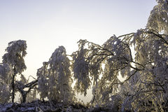 Winter landscape. Frosted tree branches in winter landscape at sunset Stock Photography
