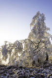 Winter landscape. Frosted tree branches in winter landscape at sunset Stock Images