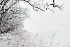 Winter landscape of frosted tree   Royalty Free Stock Images