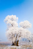 Winter landscape with frosted trees Royalty Free Stock Photos