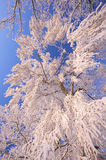 A winter landscape with frosted trees Royalty Free Stock Photo
