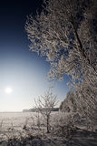Winter  landscape with frosted trees and rime Royalty Free Stock Photo