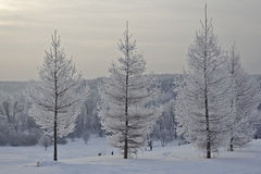 Winter landscape in frosty day. Stock Photo