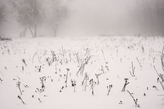 Winter landscape of a frosty field on a foggy background. Of trees stock photos