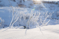 Winter Landscape. Frosty morning, winer stock photography