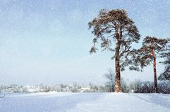 Winter landscape. Frosty pine trees in the winter forest and village on the background Royalty Free Stock Images