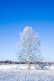 Winter landscape of frosty tree Stock Photos
