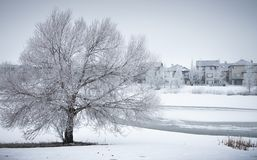 Winter Landscape with frosty tree in neighborhood park