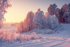 Winter landscape with frosty trees in bright morning. Sunlight stock photography