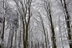 Winter landscape - frosty trees in the forest. Nature covered with snow. Beautiful seasonal natural background. Royalty Free Stock Image