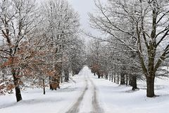 Winter landscape - frosty trees in the forest. Nature covered with snow. Beautiful seasonal natural background. Stock Photo