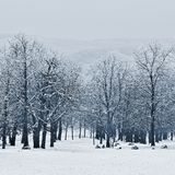 Winter landscape - frosty trees in the forest. Nature covered with snow. Beautiful seasonal natural background. Royalty Free Stock Photo