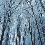 Winter landscape - frosty trees in the forest. Nature covered with snow. Beautiful seasonal natural background. Royalty Free Stock Photography