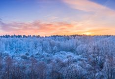 Winter landscape - frosty trees in the forest in the sunny morni Stock Photography