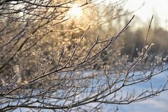 Winter landscape - frosty trees. Nature with snow. Beautiful seasonal natural background. Stock Images