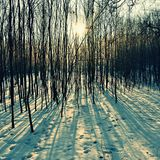 Winter landscape - frosty trees. Nature with snow. Beautiful seasonal natural background. Stock Photo