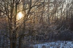 Winter landscape - frosty trees. Nature with snow. Beautiful seasonal natural background. Stock Image