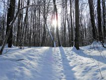 Sun in the winter forest. Winter landscape with the frosty trees. Rays of the evening winter sun penetrate trough the steams. Shadows from the trees lays on the Stock Photography