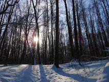 Sundown in the winter forest. Winter landscape with the frosty trees. Rays of the evening winter sun penetrate trough the steams. Shadows from the trees lays on Stock Photos