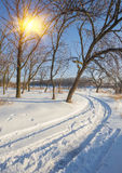 Winter landscape of frosty trees Royalty Free Stock Photos