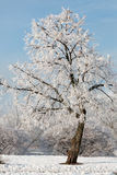 Winter landscape of frosty trees, white snow in city park. Trees covered with snow. Stock Photo