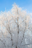 Winter landscape of frosty trees, white snow in city park. Trees covered with snow. Stock Photos