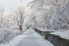 Winter landscape of frosty trees, white snow in city park. Trees covered with snow. Royalty Free Stock Photo
