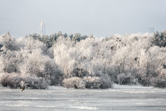 Winter landscape of frosty trees, white snow in city park. Trees covered with snow. Stock Photography