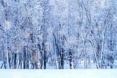 Winter landscape - frosty trees in winter forest in cold weather. Tranquil winter forest nature under snowfall, winter nature stock photos