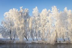 Winter landscape of frosty white trees in row on river shore. Beautiful winter scene on bright sunny day royalty free stock image