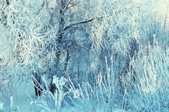 Winter landscape of frosty winter tree branches in winter forest in cold sunny weather Stock Images