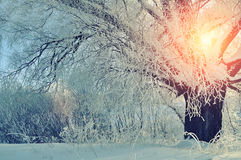 Winter landscape with frosty winter tree in the sunrise. Stock Photography