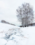 Winter landscape with a frozen creek and birches Stock Images