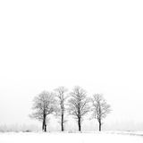 Winter landscape with frozen group of trees Royalty Free Stock Photos
