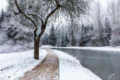 Winter landscape- frozen Ludwig Canal Royalty Free Stock Images