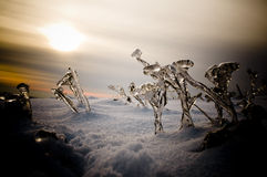 Winter landscape with frozen plants royalty free stock photo
