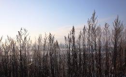 Winter landscape. Winter landscape in the frozen river floodplain in the suburbs Stock Images