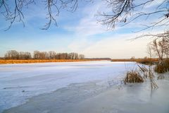 Frozen river, forest in the distance, dry sedge and blue cloudy sky. Winter landscape. Frozen river, forest in the distance, dry sedge and blue cloudy sky stock images