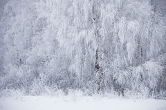 Winter landscape. Frozen snowbound trees Royalty Free Stock Photography