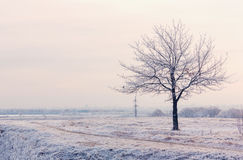Winter landscape with frozen tree Stock Photo