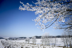 Winter Landscape. Frozen Tree Branches. Winter Landscape stock images