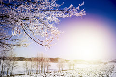 Winter Landscape. Frozen Tree Branches. Winter Landscape royalty free stock images