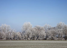 Winter landscape, frozen tree covered with snow Stock Image