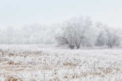 Winter landscape with frozen trees. Beautiful winter landscape with frozen trees Royalty Free Stock Image