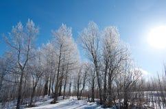 Winter landscape. frozen trees. Royalty Free Stock Image