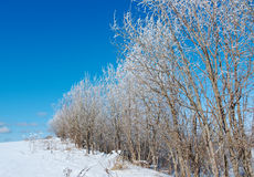 Winter landscape. frozen trees. Stock Photography