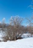 Winter landscape. frozen trees. Stock Photos