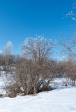 Winter landscape. frozen trees. Royalty Free Stock Images